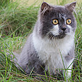 Persian Cat Sit In Green Yard by Nawarat Namphon