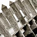 Phillies Dock Halladay by Trish Tritz