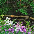 Phlox Along The Creek 7185 by Michael Peychich