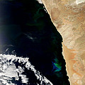 Phytoplankton Bloom Off Nambia by Nasa