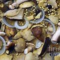 Pickled Mushrooms by Michal Boubin