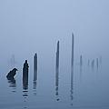 Pier Pilings In Water by David Buffington