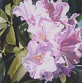 Pink Rhododendron by Sharon Freeman