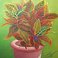 Plant Portrait II