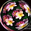 Plumeria Tile Ball Print by Cheryl Young