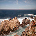 Point Lobos Number One by Catherine Lau
