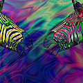 Polychromatic Zebras by Anthony Caruso