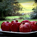 Pomegranates On White Platter 3 by Tanya  Searcy