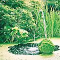 Pond by Tom Gowanlock