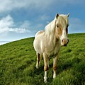 Pony On Mykines by © Rune S. Johnsson