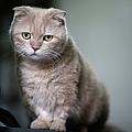 Portrait Of Cat by LeoCH Studio