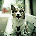 Portrait Of Dog by Moaan