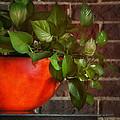 Pot Of Greens by Brenda Bryant