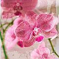 Pretty in Pink Print by Pamela Ellis