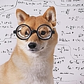 Professor Dog by Eric Jung