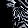 Profile Of Zebra by Natasha Denger