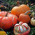 Pumpkin Patch by Kathy Yates