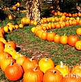 Pumpkin Patch Path by Carol Groenen