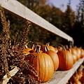 Pumpkins Aglow by Christine Tuck