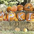 Pumpkins P U M P K I N S by James BO  Insogna