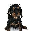 Puppy Bathtime by Jane Rix