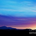 Purple Evening  by Kevin Bone