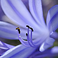 Purple Flower Close-up by Sami Sarkis