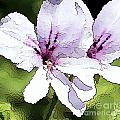 Purple Geranium by Artist and Photographer Laura Wrede