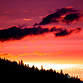 Purple Haze by Nick Gustafson