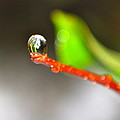 rain drops Tiny Wonder by Gloria Warren