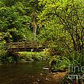 Rain Forest Bridge by Adam Jewell