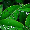Rain Patterns by Toni Hopper
