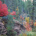 Rainbow Of The Season by Heather Kirk