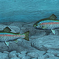 Rainbow Trout Print by Walter Colvin