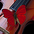 Red Butterfly On Violin by Garry Gay