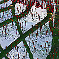 Red Crystal Refletcion by Garry Gay