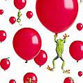 Red-eyed Treefrogs Floating On Red by Corey Hochachka
