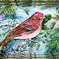 Red Finch by Mindy Newman