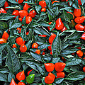 Red Hots by Mary Machare