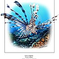 Red Lionfish by Owen Bell