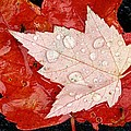 Red Maple Leaves by Mike Grandmailson