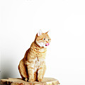 Red Tomcat Sitting On Wooden Table by MarcelTB