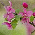 Redbud Branch by Jeff Kolker