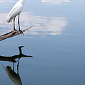 Reflecting Egret by John Simandl