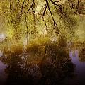 Reflection by Joana Kruse