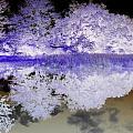 Reflective Abstracts by Kim Galluzzo Wozniak