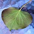 Reverse Ivy On Blue by Beth Akerman