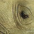 Rhino Eye by Marc Bittan