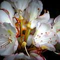 Rhododendron Explosion by Deborah  Crew-Johnson