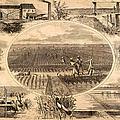 Rice Plantation, 1866 by Granger